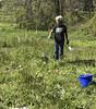 oklawaha pollinator planting 042118-30 (NCAplins) Tags: hendersonville northcarolina unitedstates us