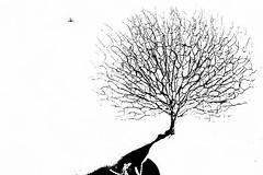 Оглянись.незнакомый прохожий... (olegkulishov) Tags: жизнь осень bw минимализм графика дерево тень