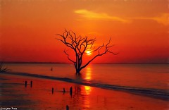 The Boneyard (gusdiaz) Tags: sunrise amanecer canon canonphotography botany bay boneyard charleston sc surreal waterscape reflection beautiful hermoso playa arena sand beach tree arbol arboles trees stunning gorgeous autumn summer spring