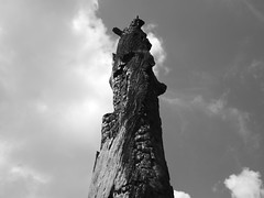 P7200122 (vmRob) Tags: burnt fire tree dead preserve park florida fl digital bw bnw blackwhite blackandwhite olympus em10 mark ii olympusem10markii monochrome
