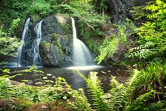 Fairy Glen Falls III (Paul C Stokes) Tags: fairy glen falls rosemarkie inverness scotland northcoast500 north coast 500 nc500 nc northcoast sony sonya7r2 a7r2 zeiss1635 zeiss 1635 sel1635z water waterfall people tree forest river rock soil grass fairyglen fairyglenfalls wood creek