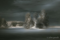 Special Mood by the Altmühlsee (Lake) (gporada) Tags: altmühlsee lake summer mittelfranken infrared landscape neblig dunstig d40 nikon nikonlens180550mmf3556 fun soft dreamy dreamland