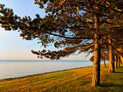 golden morning (ekelly80) Tags: michigan grossepointe july2018 summer morning morningrun view glow morninglight sun light lakestclair lake water puremichigan lakeshore sunrise grass golden trees