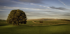 Dales golden hour (Michael Horsfield) Tags: dales yorkshire skipton landscape august uk