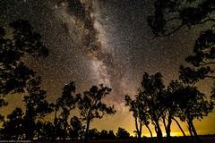 leyburn nightscape (andrew.walker28) Tags: leyburn darling downs queensland australia night stars starlight milky way trees long exposure