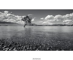 That Wanaka Tree (vito.chiancone) Tags: tree newzealand nz wanaka lake bnw black white blacknwhite clouds water long exposure nd travel traveller