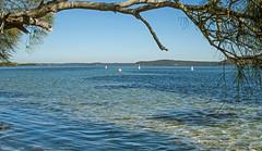 Mid-Winter dip (OzzRod) Tags: pentax k1 smcpentaxdfa50mmf28macro lake estuary swimming swansea lakemacquarie winter recreation