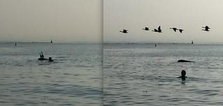 The birds and I - Les oiseaux et moi