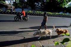 DSC_5274 (rajashekarhk) Tags: morning morningwalk walkingwithpets mylapore photography photowalk colours chennai nikon natural city li cityli citylife dogs street tamilnadu rajashekar hkr