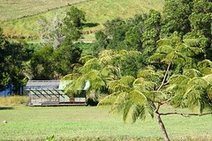 Poinciana (Gillian Everett) Tags: queensland tree ponciana landscape 7dos