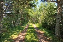 Island Lane, Springbrook, Prince Edward Island (internat) Tags: 2018 canada princeedwardisland pei springbrook eosm5 aurorahdr hdr familygathering family vacation
