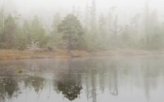 'Oliver Lake' (Canadapt) Tags: fog mist morning lake tree forest reflection princerupert bc canadapt