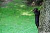 DSC_4030.jpg (Luiz A Negreiros) Tags: canada ferias2008 toronto esquilo