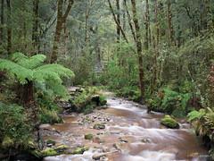 Kahuangi National Park (Marcia H) Tags: 2017 kahuanginationalpark newzealand southisland forest landscape rainforest river trees water westcoast