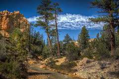 Tropic Ditch near Bryce Canyon National Park (donnieking1811) Tags: utah tropic tropicditch brycecanyonnationalpark brycecanyon nationalpark scenery landscape outdoors trees mountains stream river sky clouds blue hdr canon 60d lightroom photomatixpro