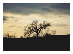 Give me just one more night... (undefinable moods) Tags: night silhouette tree sunset clouds sky dark love countryside outside trees twilight evening cielo landscape golden cloudscape shadow light darkness atmosphere