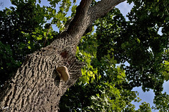 Árbol, hongo y luz... (svet.llum) Tags: árbol naturaleza planta hongos hongo texturas verano luz parque moscú rusia