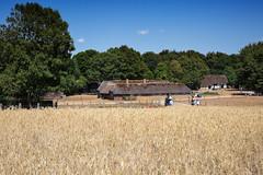 E79B1091 - Sulegården (Arne J Dahl) Tags: denmark history hjerlhede museum outdoor sulegården farm