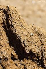 Skipsea coastal erosion 2018 (SteveH1972) Tags: skipsea skipseacoastalerosion erosion coastal eastyorkshire yorkshire outside outdoor outdoors 2018 canon 700d 70200 canon700d canon70200 nonis northernengland britain uk nature