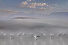 Riposo (Zz manipulation) Tags: art ambrosioni zzmanipulation natura animali uccelli lago acqua gruppo montagna cielo