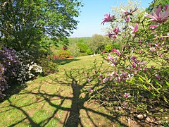 Tree Shadow! ('cosmicgirl1960' NEW CANON CAMERA) Tags: flowers worldflowers parks gardens nature lanhydrock cornwall nt pink green yabbadabbadoo