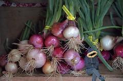 Organic Onions (Scott 97006) Tags: onions organic produce shelf sitting