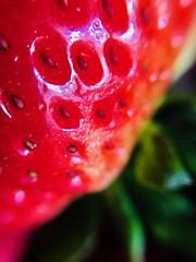 All I need is strawberry (Gotham Fer) Tags: vegans nature batman sports moto sony canon nikon camera toys argentina buenosaires iphone wild green red macro frutilla fruit strawberries strawberry