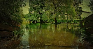 GERMANY, Pferdeschwemme bei Leonberg, 76394/10394