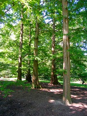 Trees in Light and Shadow (Stanley Zimny (Thank You for 31 Million views)) Tags: tree light shadow green botanical garden bronx