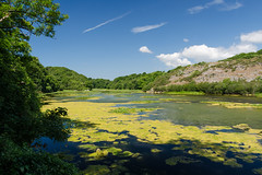 Bosherston Ponds (mikeplonk) Tags: pembrokeshire westwales wales stackpole stackpoleestate bosherston lilypads lakes ponds nature nikon d5100 18140mm kitlens polarisingfilter polarizingfilter cpl nationaltrust water