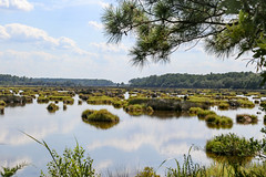 Bear Island WMA - ACE Basin - S.C. (DT's Photo Site - Anderson S.C.) Tags: canon 6d 24105mml lens ace basin coastal edisto colleton southcarolina wildlife sanctuary swamp bear island wma lowcountry scenic southern america usa landscape