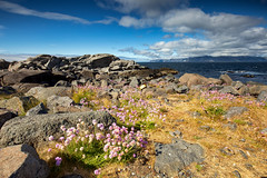 With flowers from Norway (zilverbat.) Tags: noorwegen norwegian travel tripadvisor zilverbat outdoor nature flowers clouds bild tour tourism rocks coast coastline image nordland norwic norge europe europa mountains flora wild purple habitat heritage summer scandinavië