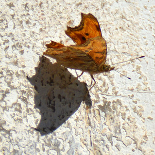 A butterfly on the wall