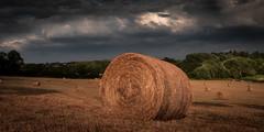 Wey hay hay (paullangton) Tags: hay bale golden countyrside summer crop harvest hertfordshire canon cloud clouds dark rain storm round farm rotoballe stubble straw sky blue light hale bales