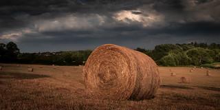 Wey hay hay