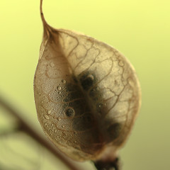 embryo (SkyeBaggie) Tags: seeds embryo macro