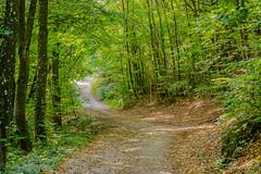 Hiking in the Wienerwald (a7m2) Tags: loweraustria perchtoldsdorf mödling wienerwald föhrenberge wald forstwege heide wiese weingarten wandern jogging erholung natur hiking