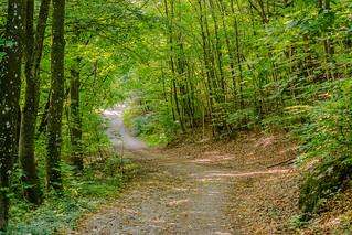 Hiking in the Wienerwald