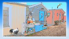 Viken in Skåne (4) (andantheandanthe) Tags: skåne sweden schweden höganäs höganäskusten coast coastline june midsummer kullabygden shed sheds cabins fishermenhouses houses hen seagull gull viken visualart