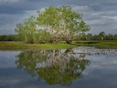30-Kakadu- Yellow Waters (gosiaplus) Tags: 2018 day14 nt