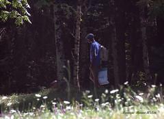 L'oréee du bois (Dominique Dumont Willette) Tags: forêt ombres lumières black marcheur homme fleurs st férréol midipyrénées