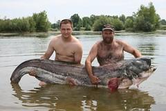 NEVEROVATNO ! Upecali DIV-a u Gružanskom jezeru. Som dugačak  dva i po metra (kraljsin) Tags: dvaipometra gružaneskojezero pecanje ribolov som