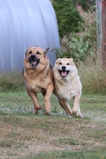Lulu & Sakke