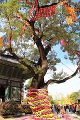 Lantern Tree (Jane Inman Stormer) Tags: tree buddhism lanterns temple seoul southkorea color yellow october flowers flowerfestival mums branches