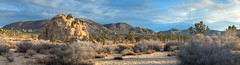 Desert Panorama, Joshua Tree National Park (Non Paratus) Tags: joshuatree nationalpark panorama mojave desert rocks riversidecounty goldenhour hills mountains