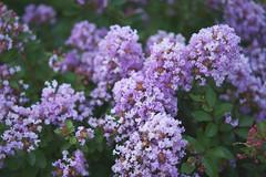 DSC04181 (@saka) Tags: autoupload flowers 69646981 leaves 1030 street 346