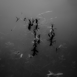 Pond Surface Layers 020