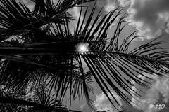 Gorge of fire (mathieuo1) Tags: caibé vietnam art asia assassin light lines nature palm tree park composition rules graphism contrast dynamic work up down blackandwhite sun hard rays sundown clouds sharp feel mood mekong delta travel explore explosion artlight nikon dlsr fullframe mathieuo