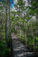 Grassy Waters Boardwalk (tclaud2002) Tags: boardwalk trail winds winding trees swamp marsh nature mothernature landscape outdoors grassywaterspreserve westpalmbeach florida usa