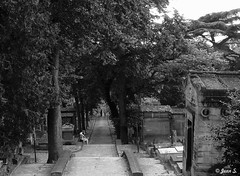 ... (Jean S..) Tags: cemetery stairs graves old ancient bw blackandwhite monochrome trees